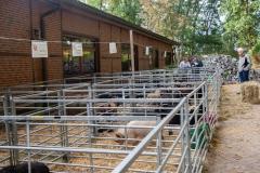 Unterbringung der Schafe