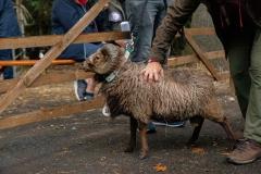 Überprüfung der Wollqualität
